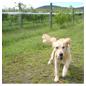愛犬とお散歩&お食事イメージ画像